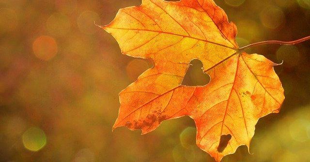Herbst-Lieblinge